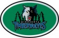 NBA Minnesota Timberwolves Color Auto Emblem